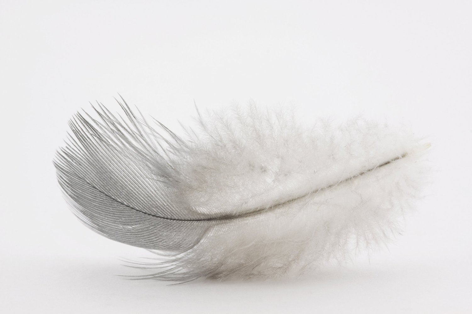 White Goose Feather Duvet Down Feather Healthy Bedding Inc